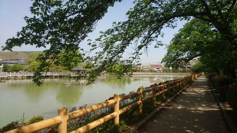 京都府長岡京市、長岡天満宮の前に位置する「八条ヶ池」
