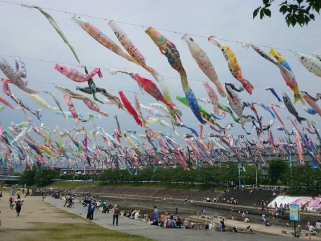 大阪府高槻市内を流れる芥川には多くの鯉のぼり